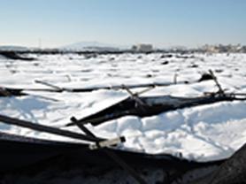 '겨울 인삼밭' 부직포 덮고 물 빠지는 길 정비해야