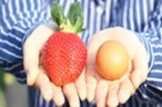 선물용·가공용…딸기 품종도 소비자 맞춤 개발